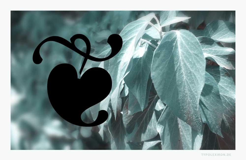 Das Efeublatt symbolisierte in griechischen, römischen und frühchristlichen Kulturen die ewige Liebe, denn der »Gemeine Efeu« (Hedera helix) ist eine sehr langlebige Pflanze, die nicht selten 500 Jahre alt werden kann.Beispiel: Vergleich eines Aldusblattes aus dem Font »ITC Zapf Dingbats« von Hermann Zapf (1918—2015) im Vergleich zu blühfähigenLaubblättern (Altersform) des Efeus, die etwa 20 Jahre nach der Keimung auftreten können.