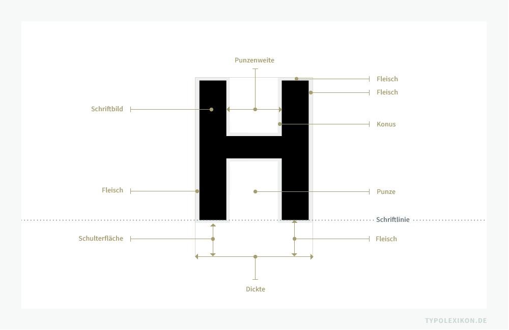 Am Kopf eines Schriftkegels befindet sich das spiegelverkehrt erhabene (druckende) »Schriftbild« sowie das nicht erhabene (nichtdruckende) Fleisch inklusive Konus, Schulterfläche, Vor- und Nachbreite.